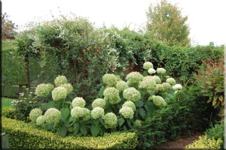 planten verzorging van a tot z van alo vera en oleander. Black Bedroom Furniture Sets. Home Design Ideas