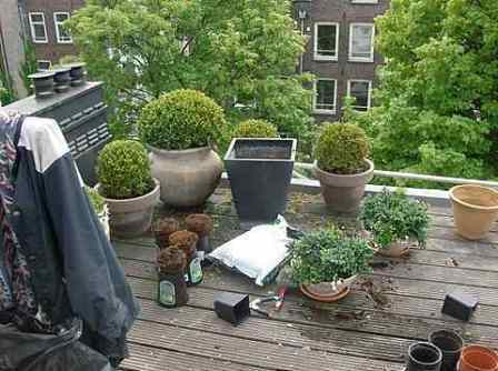 Planten voor dakterras