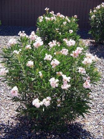 Planten verzorging van a tot z van alo vera en oleander tot orchidee spathiphyllum en - Sterke witte werpen en de bal ...