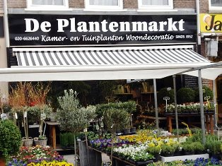 plantes and flower shop